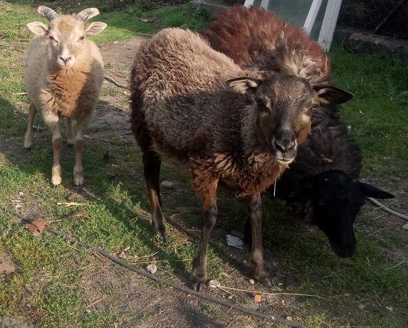 Owieczki 3sztuki
