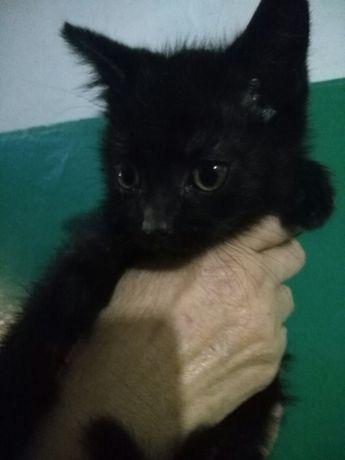 Кошечка 1,5месяца