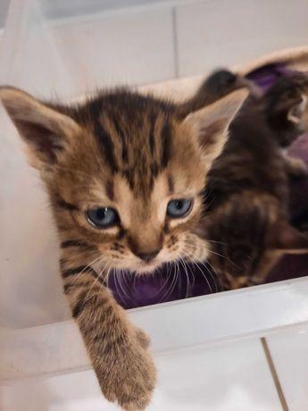 2 kotki szukaja domów