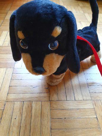 Piesek Interaktywny Jamnik Chodzi na Smyczy