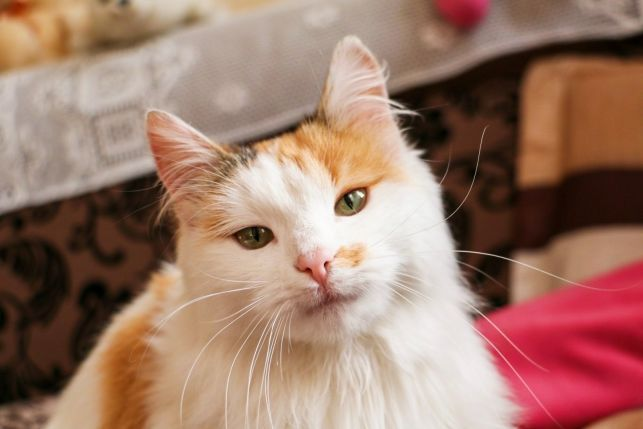 котенок кошка в добрые руки