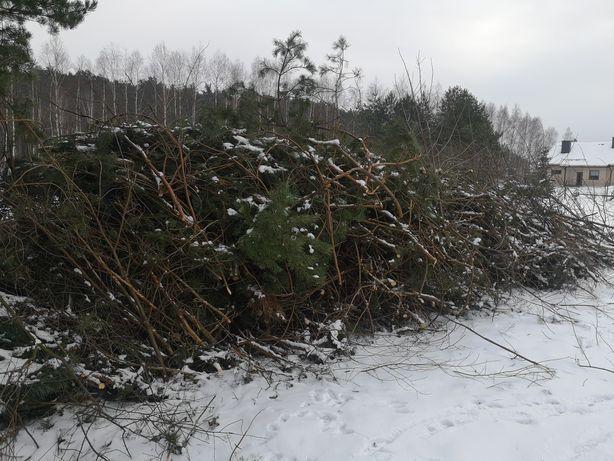 Gałęzie ścinki z przerąbu drzew