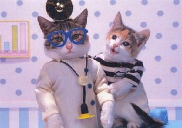 вызов ветеринарного врача на дом/ветврач на дом/ветеринар