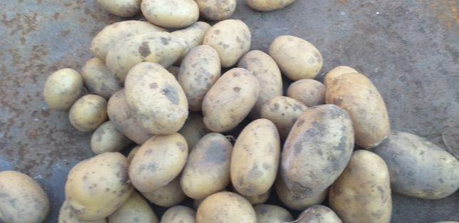 Ziemniaki 0,40zł/ kg