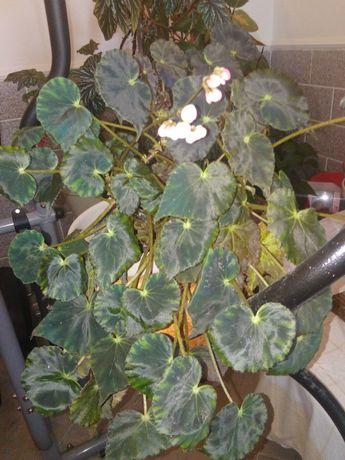 Vendo planta de interior ou jardim