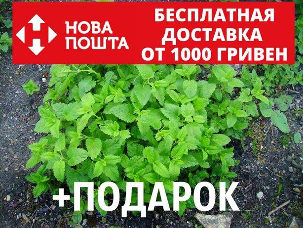 Мелисса лекарственная семена (20 шт) лимонная трава, лимонная мята