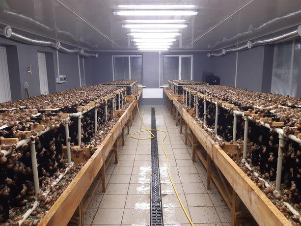 Продам равликову ферму (улиточная ферма)