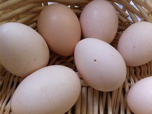 Jajka zielononóżka, zielononóżki, eko, BIO, chów ekstensywny naturalny
