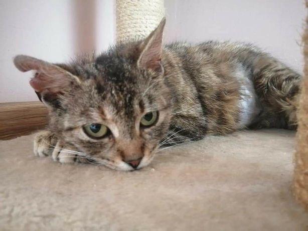 Koteczka Stella szuka domu