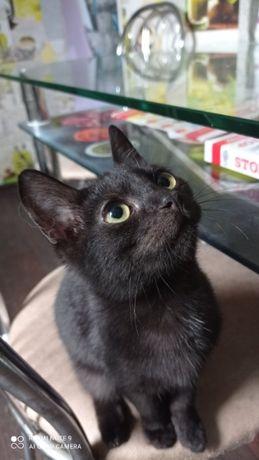 Черный котеночек