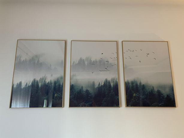 Tryptyk 3 obrazy plakaty złote ramki aluminiowe las