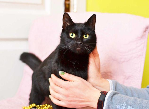 Охоронниця добрих снів - киця Мелані | чорна 1 рік, кошка, кошечка