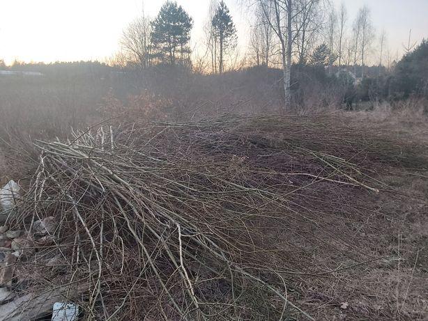 Gałęzie/drewno Ługwałd