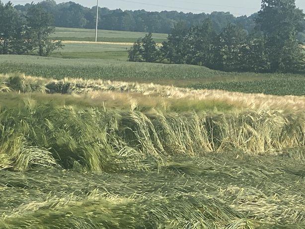 dzrerżawa  gruntow ornych rolnych