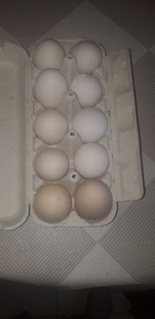 Sprzedam jajka od kur zielononóżek