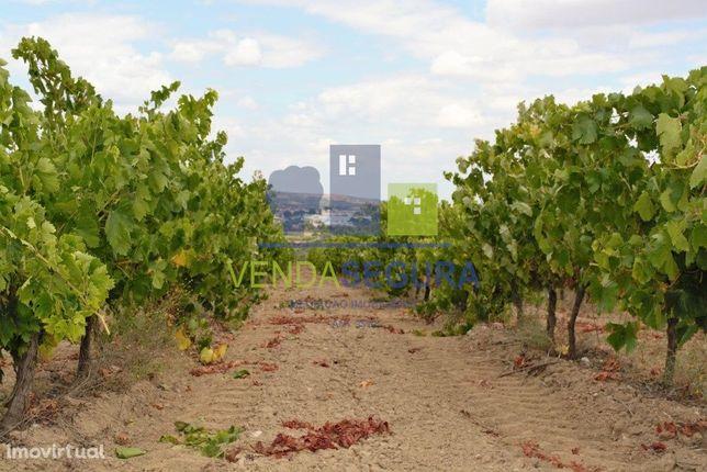 Terreno agrícola com vinha | Vila de Frades