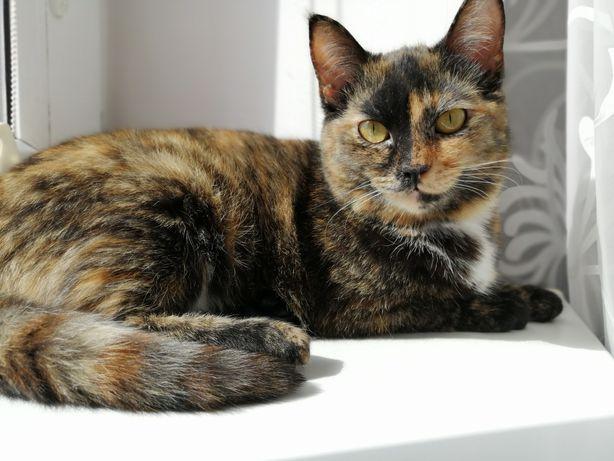Стерилізована кішка 8 місяців