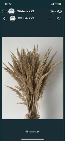 Trawa susz suszona trzcina idealna do wazonu