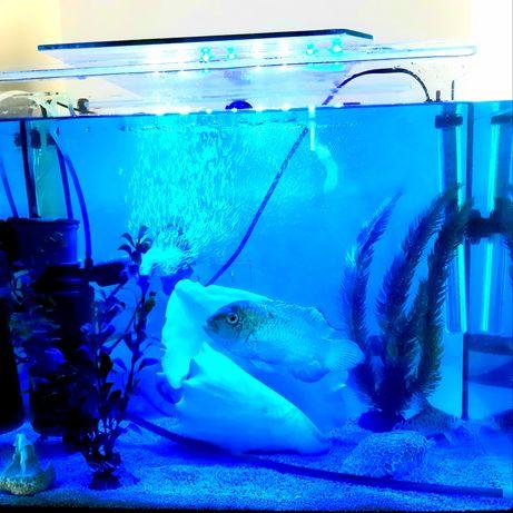 Аквариум,все компоектующие и рыбки