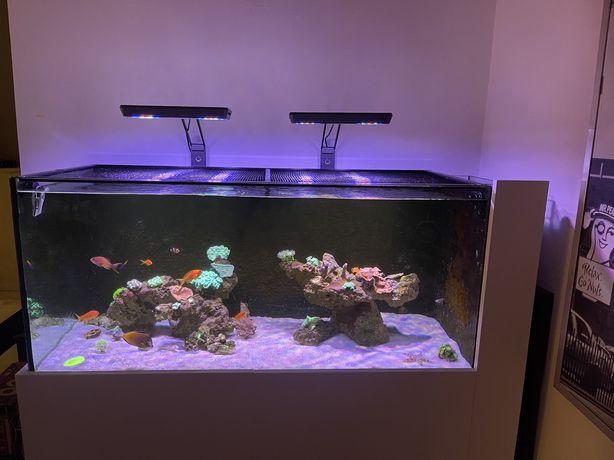 Iluminação Leds Design para Aquário