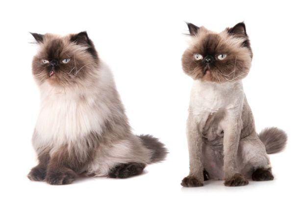 Груминг ( стрижка котов) от 200 грн