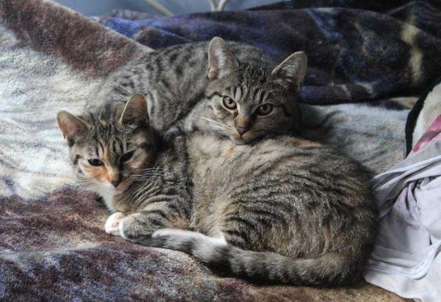Dwa bezdomne kotki szukają domu! Kocie rodzeństwo prosi o pomoc!