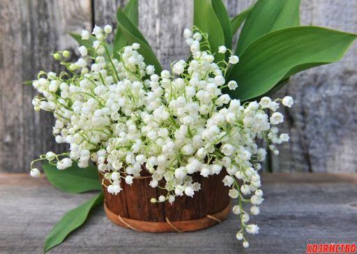 Весняні запашні квіти