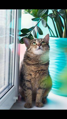 Ласковая Кошка в хорошие руки!