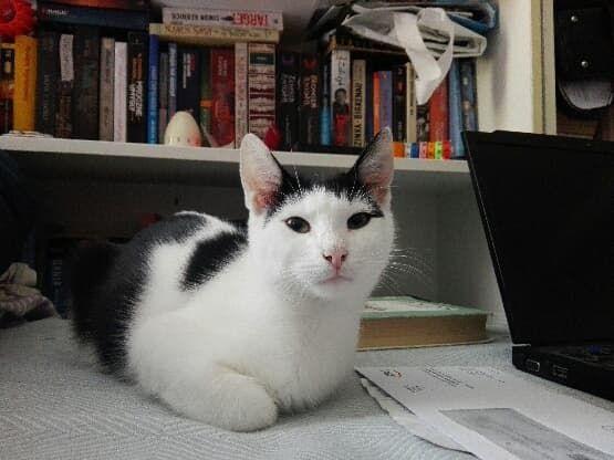 MIsza kotek szuka domu adopcja