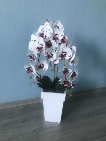 Орхідея латексна