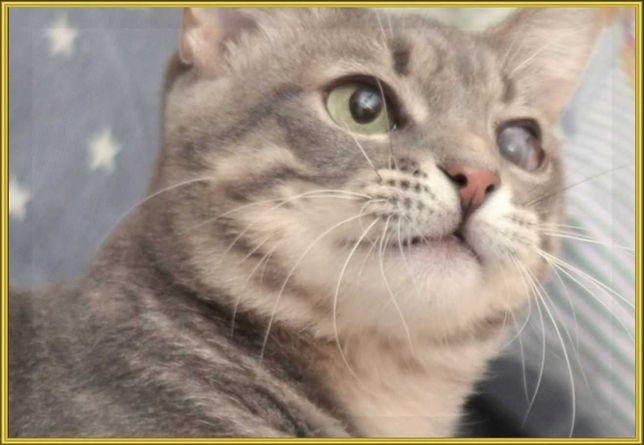 Серость в дымке. Стерильная юная кошка