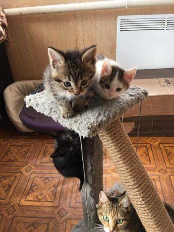 Отдам котят два котика и две кошечки