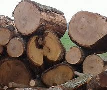 Dąb , buk , jesion,drewno kominkowe , twarde i kaloryczne sezonowane.