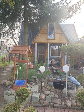Działka ROD Mickiewicza Ciołkowskiego duży domek z poddaszem użytkowym