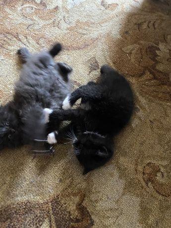 Котята бесплатно в хорошие руки