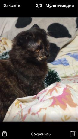 Домашний котенок, 5 месяцев.Девочка