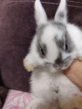 Декоративные миниатюрные кролики