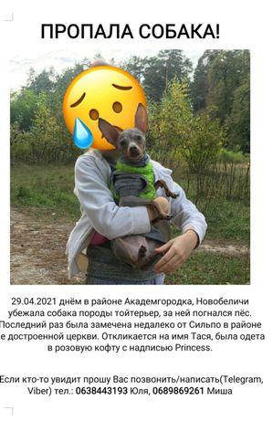 Потерялась собака!!!