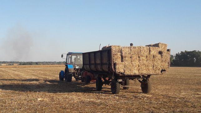 Тюки соломи пшеничної, яшної 45×45×100