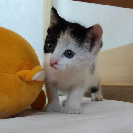 Кошеня Буся 1 місяць шукає дім котик, киця безкоштовно