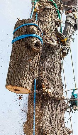 Ogrody-czyszczenie działek-wycinka drzew
