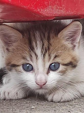 Котик хлопчик ( безкоштовно)