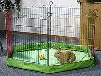 передержка животных (собаки, коты,хомячки ,крыски ,черепашки )