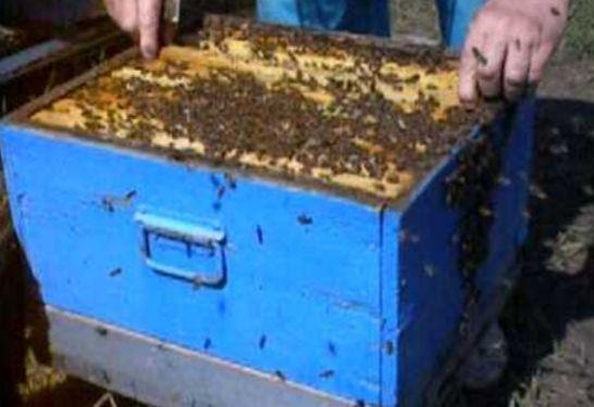 Продам пчелосемье Украине степная