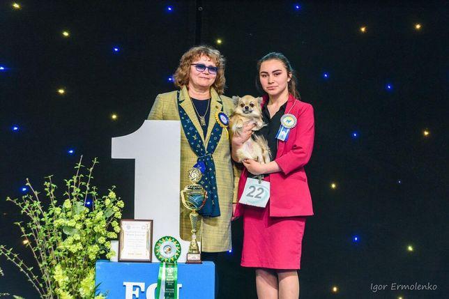 Хендлер, показ собак на выставках, хендлинг, Киев