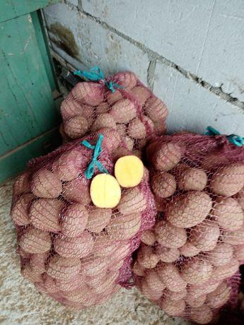 Sprzedam ziemniaki  jadalne i sadzeniaki