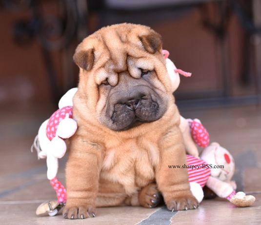 Очаровательный клубный щенок