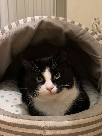 Черно- белый , молодой котик ,7 мес, кастрирован
