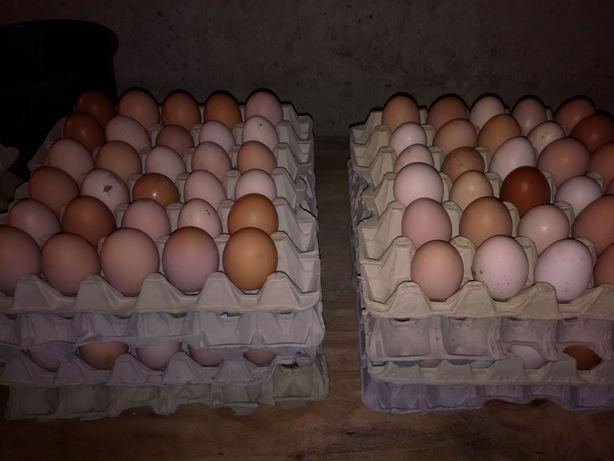 Jajka wiejskie swojskie