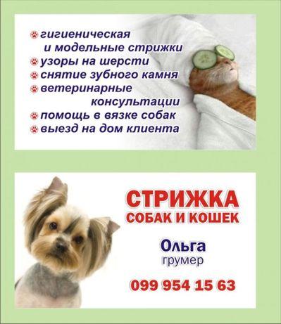 Снятие зубного камня, стрижка собак и кошек на дому